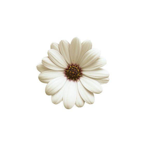 "Cosmetics tianDe - album ""Scrap Kits / FanetteDesign_AlOreeDuJour» on... ❤ liked on Polyvore"