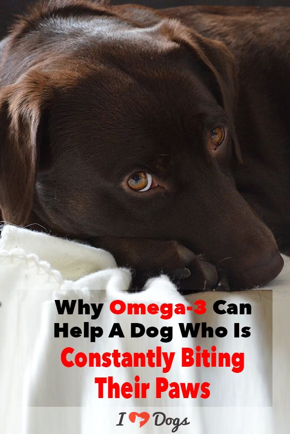 Did You Know That Omega 3 Can Give Your Dog S Itchy Paws Some Relief Itchy Dog Dogs Dog Help