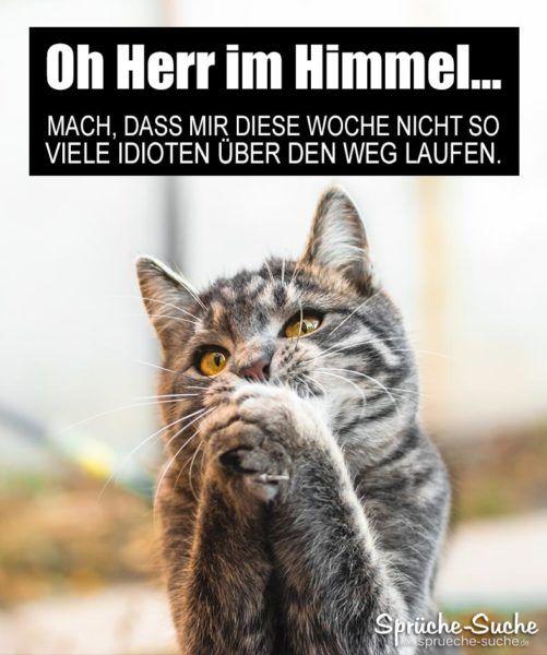 Lustiger Spruch Mit Katze Zum Wochenstart Und Montag Spruche Suche Katzen Lustige Spruche Lustig Katze Lustig