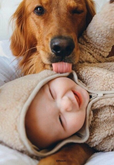 Happy Little Boy with his Golden Retriever Dog - Ttue Love!:
