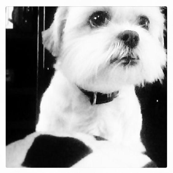 Mijn hondje dora❤️❤️
