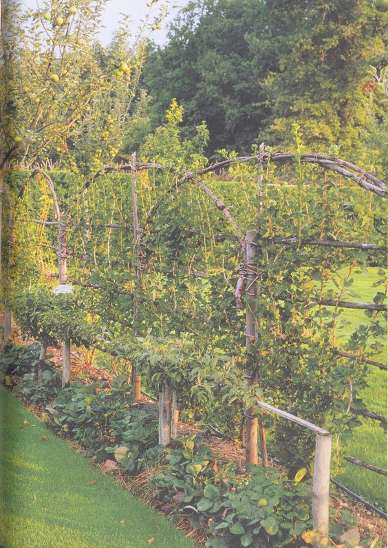Fan-trained gooseberries, stepover apple trees and strawberries
