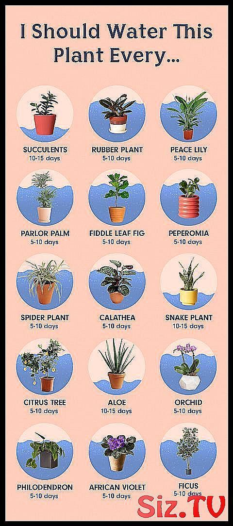 How To Water The 15 Most Popular Houseplants A Guide To How Often