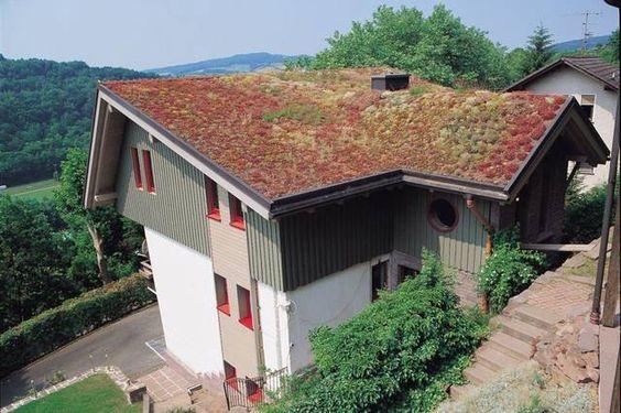 Laut Friedensreich Hundertwasser gehört die Horizontale der Natur. Da ist ein grünes Dach ja nur logisch!
