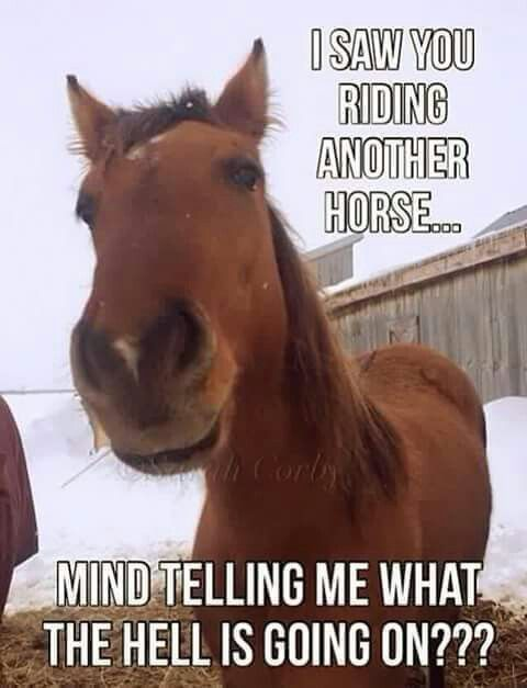 horseriding #horserider #equine Cowgirls and Horses | Funny horse memes,  Funny horses, Horse riding quotes