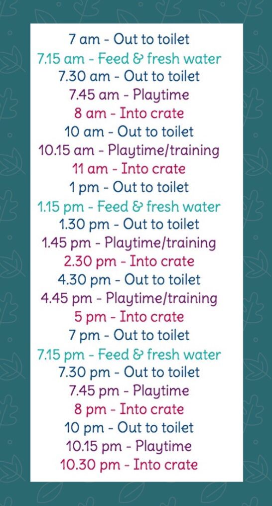 Example Feeding Toilet Schedule For Puppies Having 3 Meals Per