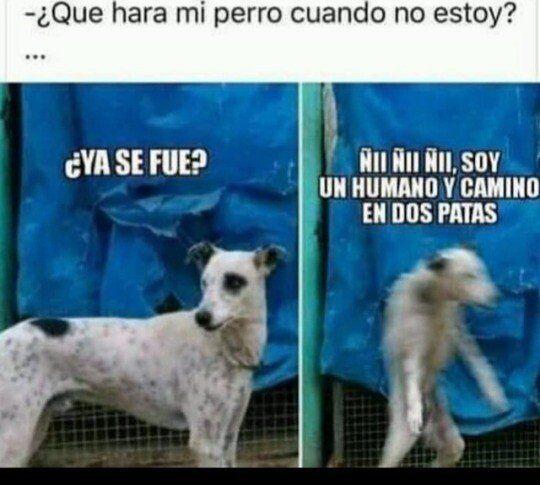 Los Perros Son Unos Cachondos Memes Risas Memesespanol Instagram Fotos Chistes Top Comic Zerflix Amoleer Funny Memes Funny Spanish Memes Animal Memes