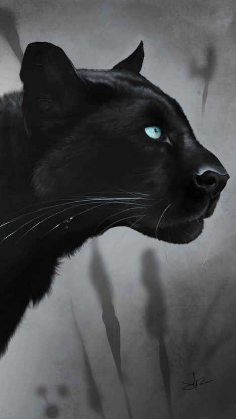 Black Jaguar Iphone Wallpaper Free Getintopik In 2020 Black Jaguar Cat Silhouette Jaguar Wallpaper