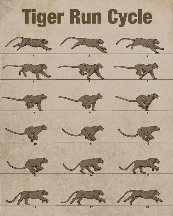 Tiger-run cycle by Aaron Blaise — Animal Anatomy