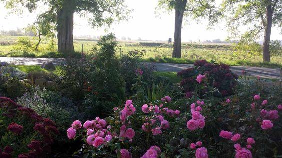 Herbstlicher Spaziergang durch Middelhagen | Rosen im Garten von TO HUS in Middelhagen (c) Frank Koebsch (4)