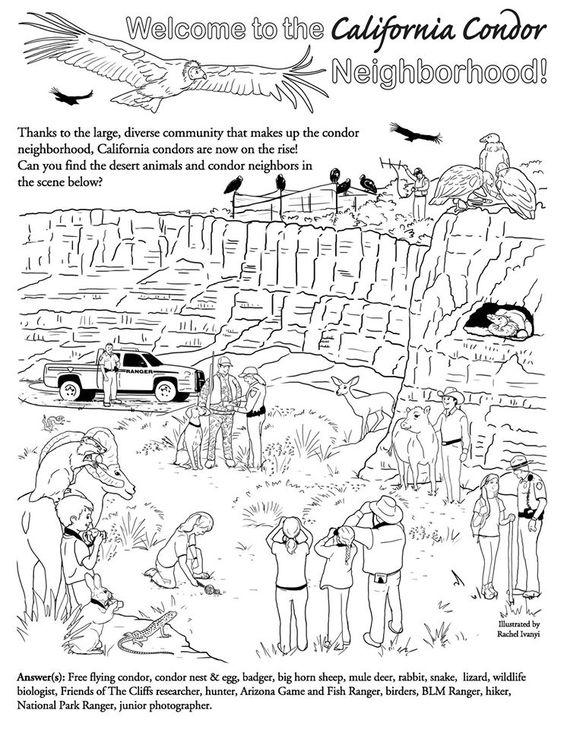Welcome to the California condor neighborhood! Local Arizona - park ranger resume