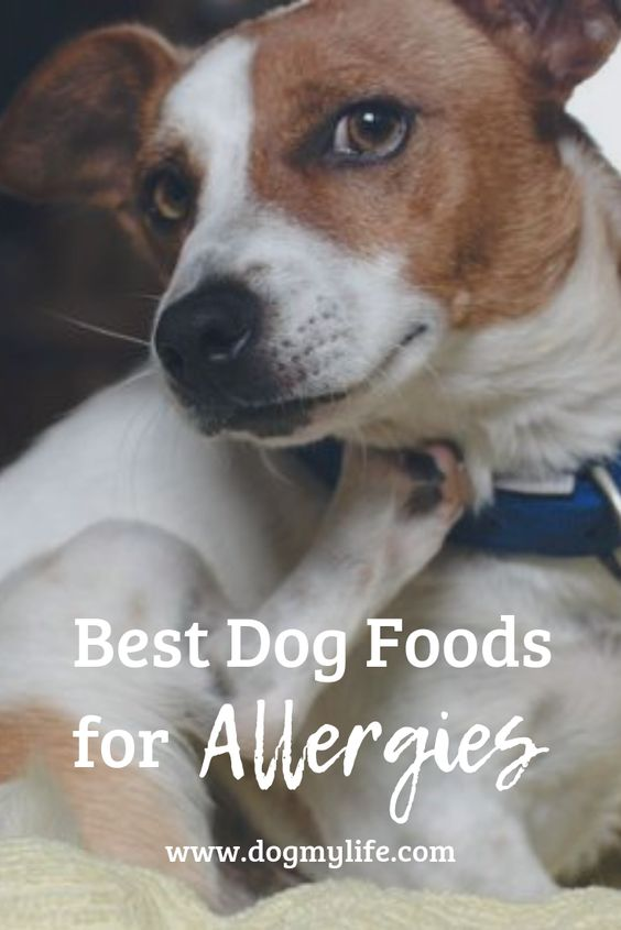 Best Dog Foods For Allergies 2019 Best Dog Food Dogs Dog Food