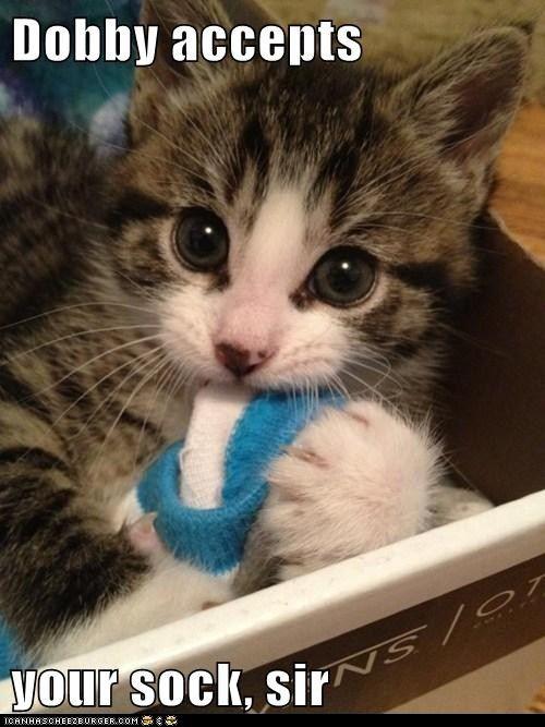 cat love bites too hard