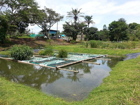 Wetland Waste Treatment | ADREC