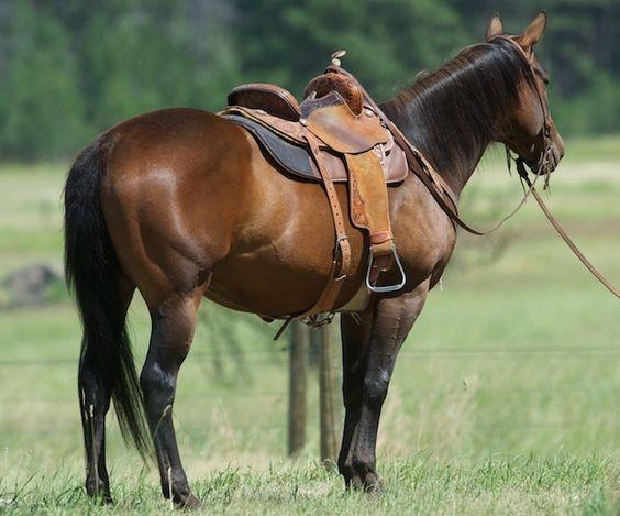Finished Barrel Horse For Sale  CavvysavvyCom  We Know
