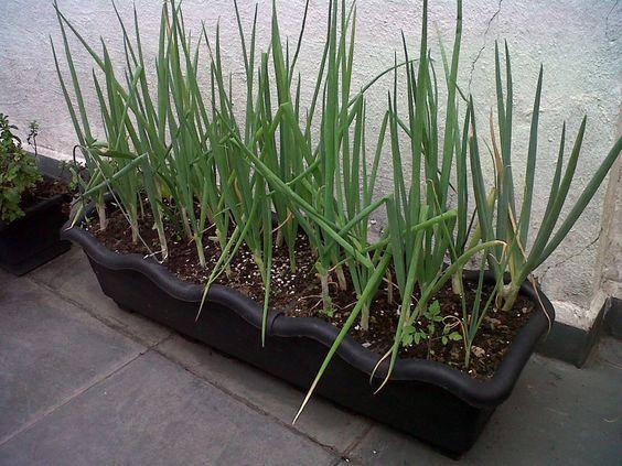 Como preparar seu vaso para cultivar sua horta em casa ou for Plantas decorativas de plastico