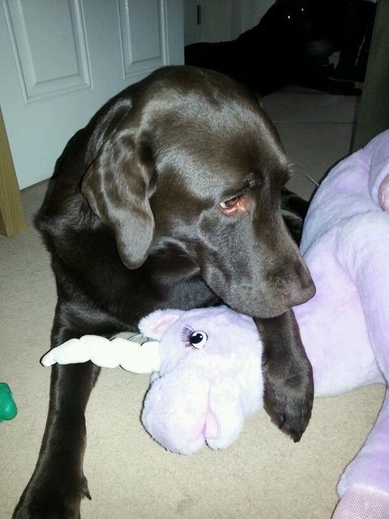 Like I said... he likes his unicorn... rosie in the background feeling left out! pic.twitter.com/B1Urxv36pw