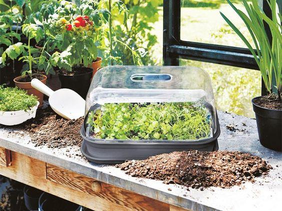 Gartenarbeit im februar  Gartenarbeit im Februar - das muss gemacht werden | Gardens