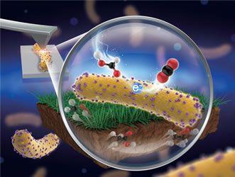 Resultado de imagen de Electrochemically Active Microorganisms xiao
