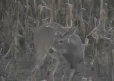 Big Buck Deer!!!  =-)