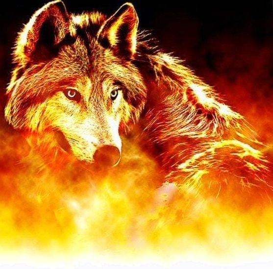 Burning Wolves Wallpapers Burning Wolves Wallpapers Wolf Wallpaper Wolf Images Wolf Decor Anime wallpaper red wolf