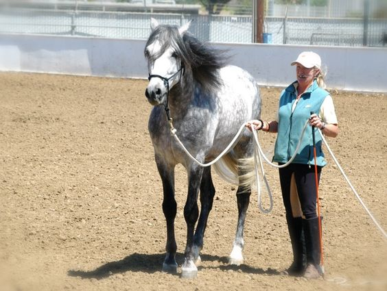 Panadero with trainer, Margit Deerman.