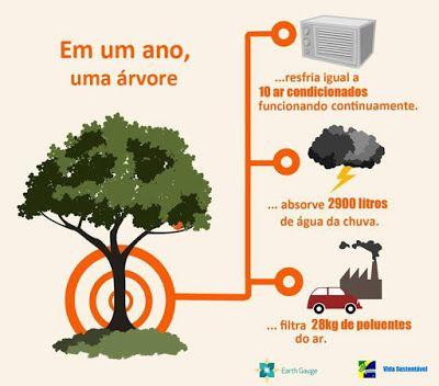 Barbara Paisagismo e Meio Ambiente: UMA ÁRVORE...