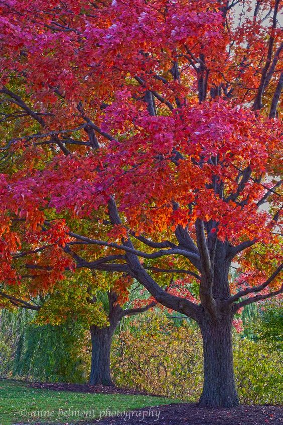 Brilliant Color In Fall Chicago Botanic Garden By Anne 640 x 480