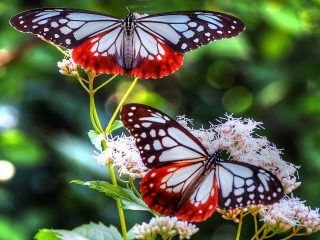 The ever new collection of butterfly full hd desktop wallpaper