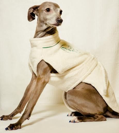 """My GQ Model of the Day """"Pronto"""" modeling the NEW Cotton Bathrobe for your Pooch!! It is made of 100% Cotton and is very relaxing, comfy and cute!! www.teacuptutucharm.com"""