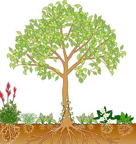 Best B ume erfolgreich unterpflanzen Schattenstauden G rten und Schattengarten