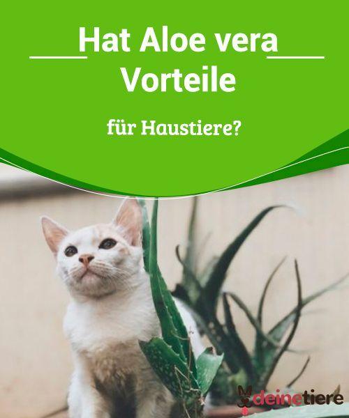Hat Aloe Vera Vorteile Fur Haustiere My Animals Haustiere Tiere Aloe Vera