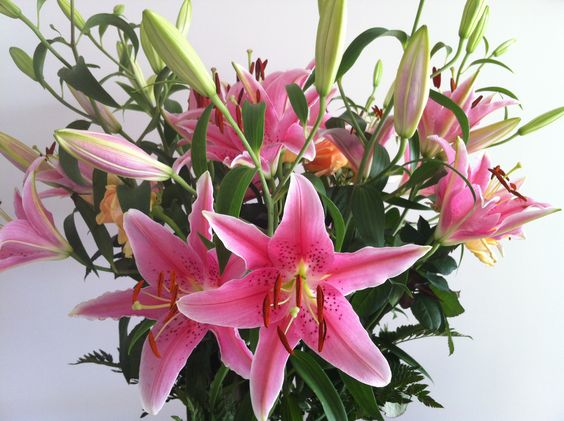 Bouquet di gigli rosa