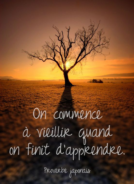 #CitationDuJour « On commence à vieillir quand on finit d'apprendre. » -Proverbe japonais