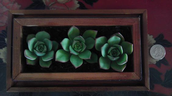 Plant succulents in decorative box lids