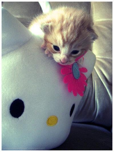 Pin Von Silvia Lehmann Auf Cute Cat S Beamer