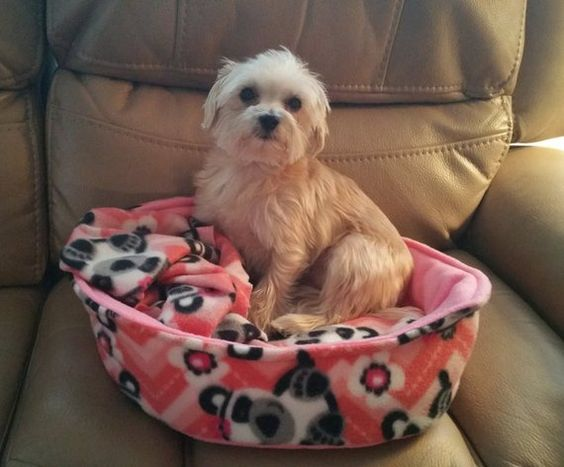 Large Pet Bed Puppy Bed Kitty Bed Dog Bed Cat Bed Yorki Bed