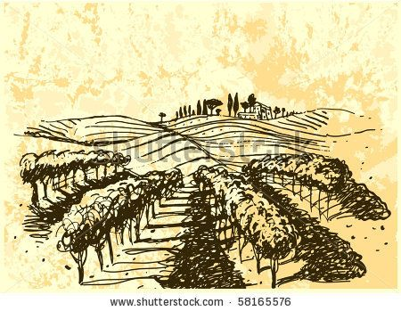 stock vector : vineyard