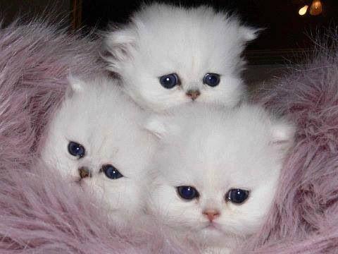 Three fluffies!