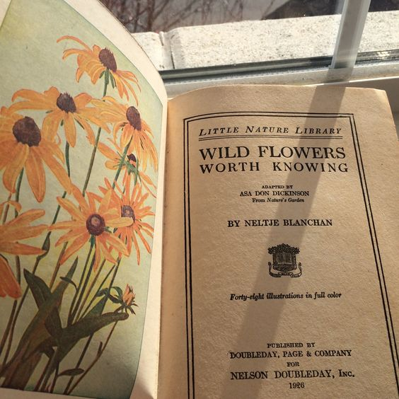 "floweralia: "" For more Visit MY BLOG HERE. """