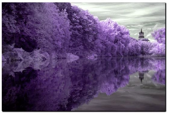 Purple trees: Purple Trees, Purple Reflection, Favorite Places Spaces, All Things Purple, Nature, Favorite Color, Purple Passion, Color Purple, Purple Perfection