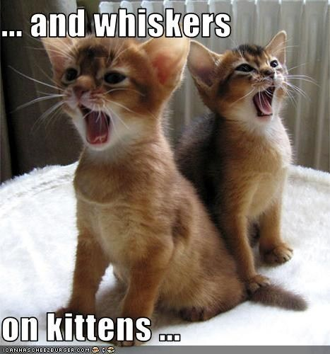 ... and whiskers on kittens ...
