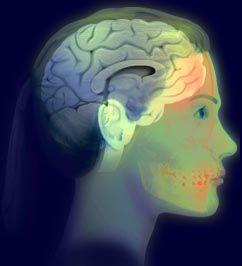 Brain Atlas click on each section -forebrain, midbrain,  hindbrain, spinal cord,  lobes, limbic system, Coronol section