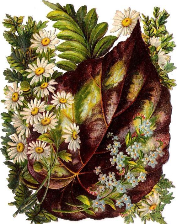 Oblaten Glanzbild scrap die cut chromo Blatt  XL 14,5cm Farn Gänseblümchen daisy: