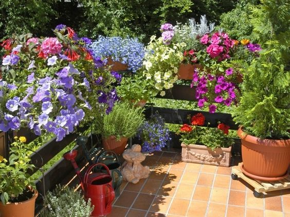Pin By Mws On Projekty Podworek Mini Garden Garden Plants