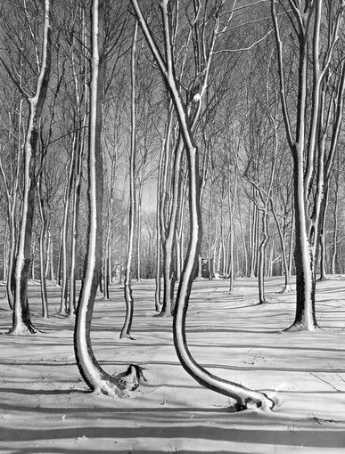 175 years of Sun photography: 1959 -- Crooked trees
