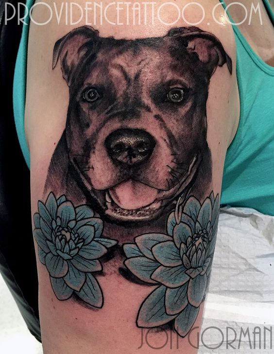 Pet portraits, Pitbull and Pets on Pinterest