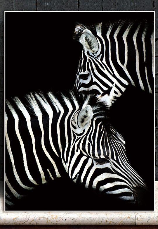 Zebra Couple Wall Art Hd Zebra Wall Art Animal Wall Art Zebra