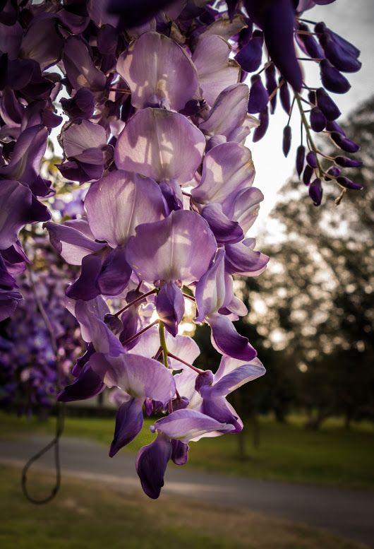 Sign In Beautiful Flowers Flower Beauty Flowers