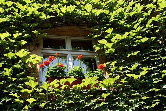 Flor, Folhas, Verde Overgrown, Verde